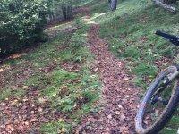 Con la bici por senderos del bosque
