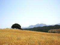 Ambiente mediterraneo