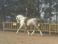 Paseos a caballo para despedidas