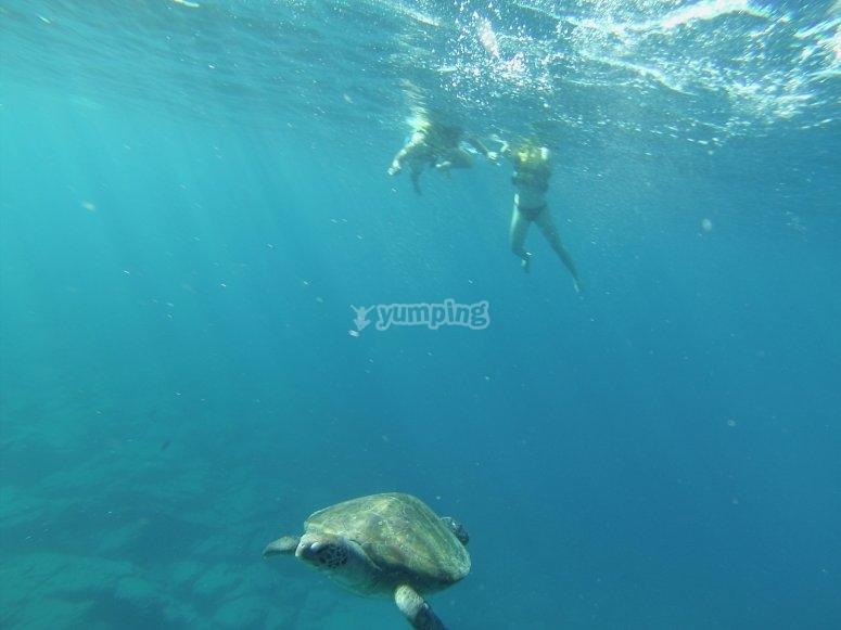 Ruta de snorkel y nado con tortugas en Tenerife