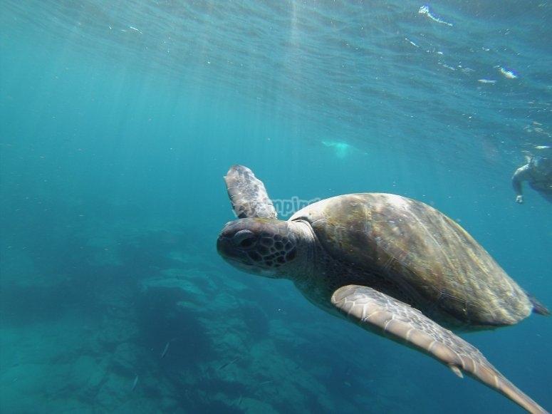 Paseo de kayak y nado con tortugas por Tenerife