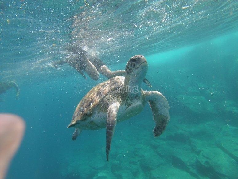 Snorkel en Los Cristianos