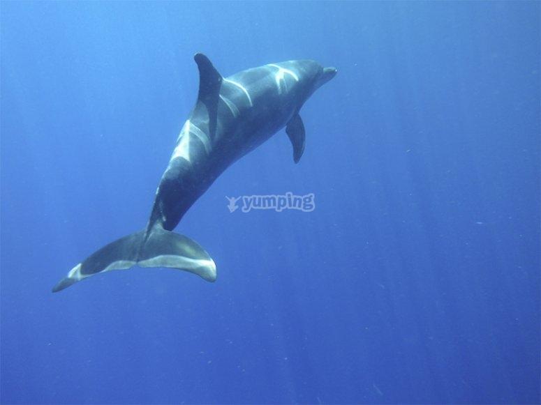 Kayak y avistamiento de delfines