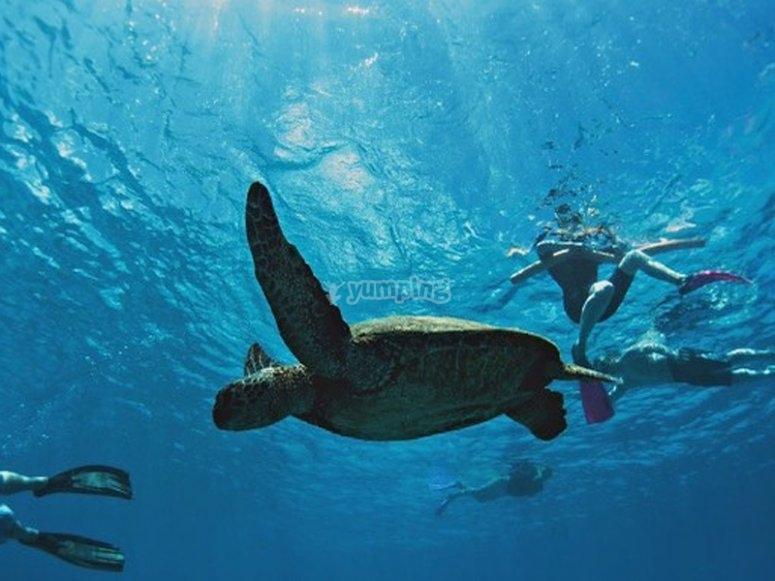 Buceando con tortugas en Tenerife