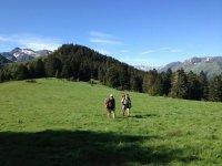 Caminando tras los Pirineos