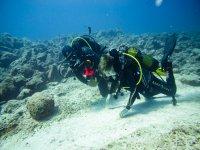 De 4 a 7 inmersiones con tu equipo a Isla de Lobos