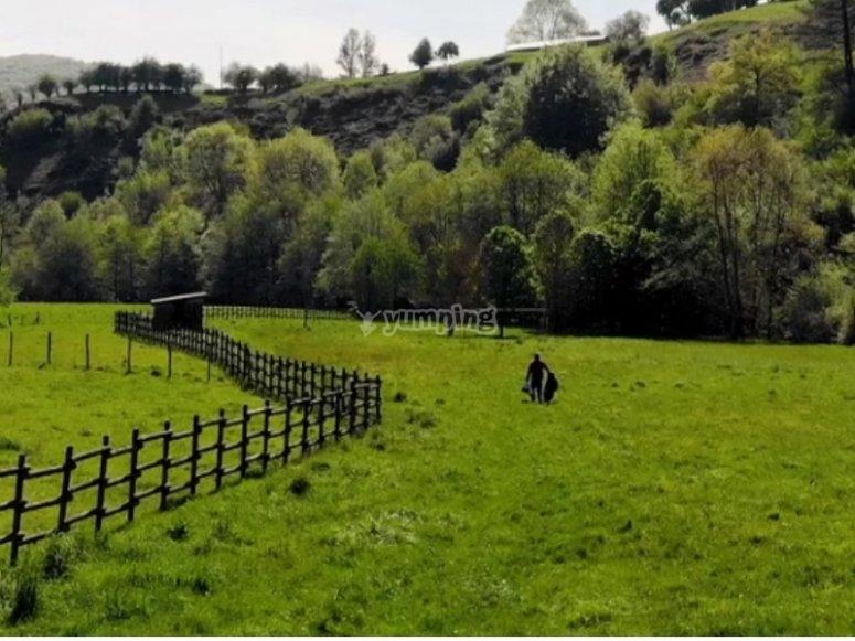 参加小组郊游的农场
