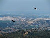 aves sobrevolando sevilla.JPG