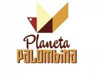 Planeta Palombina Campamento Multiaventura