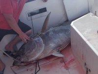 Atun en el barco en Huelva