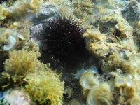 Ejemplar vida submarina