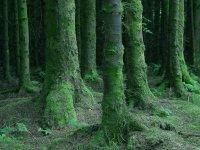 不要迷失在树林中