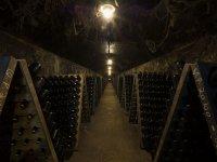 大厅Penedès的酒厂在Penedès的葡萄酒的自行车之旅Penedès的葡萄酒之旅 - 标志penedes.jpg