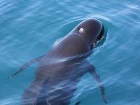 通过直布罗陀海峡观看鲸鱼的旅行
