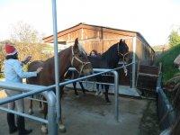 Cepillando a los caballos
