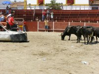 plaza con las vaquillas
