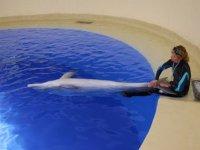 Actividad con delfines