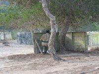 护栏和树木