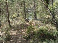 Pista en bosque
