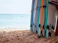 SUP boards on the shore
