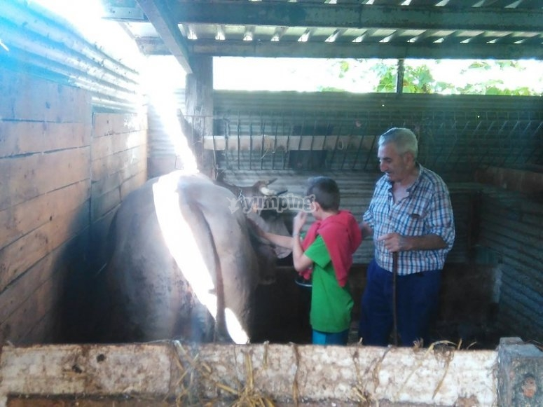 Conociendo a las vacas en granja escuela Sastarrain