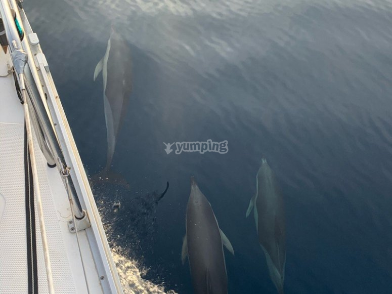 Ver delfines en Cádiz