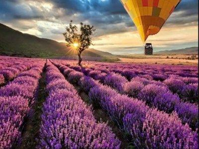 热气球飞越布里韦加薰衣草田