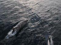 avistamiento de delfines en murcia