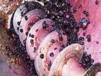 Fabricación del vino
