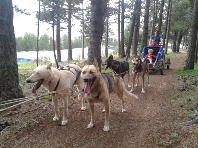 4x4 Andorra Mushing