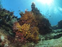 logoecologicaldivers考虑珊瑚