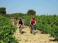 Bici entre viñedos