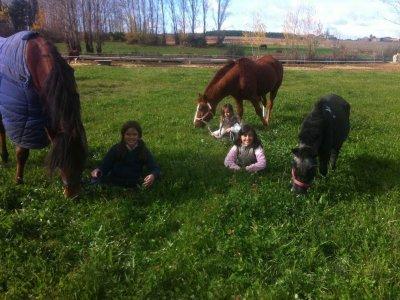 El Recreo Escuela de Equitación
