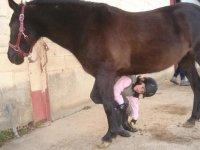 cuida a tu caballo