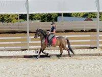 Escuela de equitación en Málaga