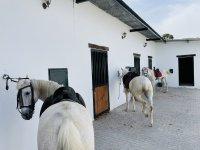 Nuestros caballos listos para el campamento de hípica