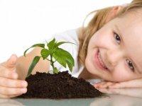 Cuidando la planta