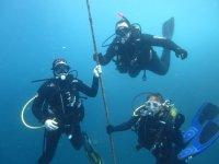 在海底潜水棕褐色储备开普敦Tinoso