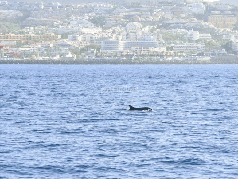 Avistamiento de cetáceos por Tenerife para niños