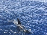 Ver delfines en Tenerife con niños