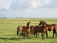 horses in cazorla