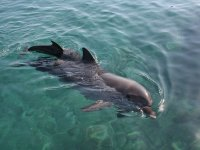 Delfin en aguas cristalinas