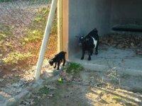 Cabrillas en la granja escuela.