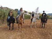 坎佩罗标志马古道与各种颜色的马
