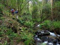 Por los bosques gallegos