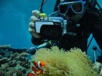 在全浸拍摄海洋生物