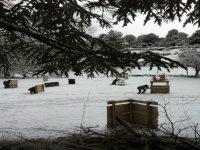 Paintball sobre nieve