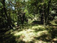 Internandose en el escenario de bosque