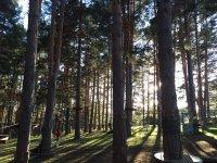 Detalle del parque de arborismo