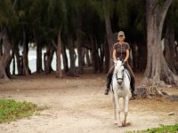 走在一匹白马